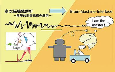 脳・神経システム工学